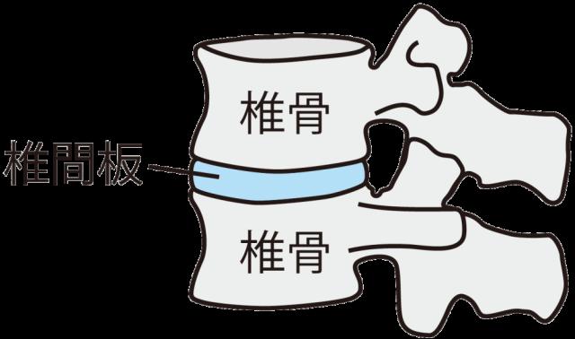 椎間板の画像